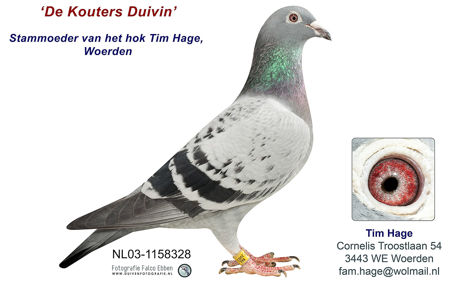 Topkwekers De Kouters Duivin